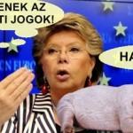 Állati jogok, emberi kínok – Az Európai Parlament és más források után szabadon…